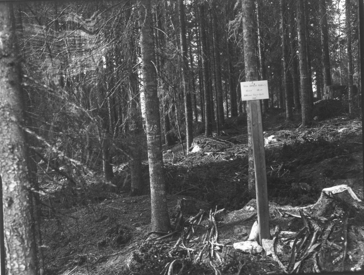 Solberg skog