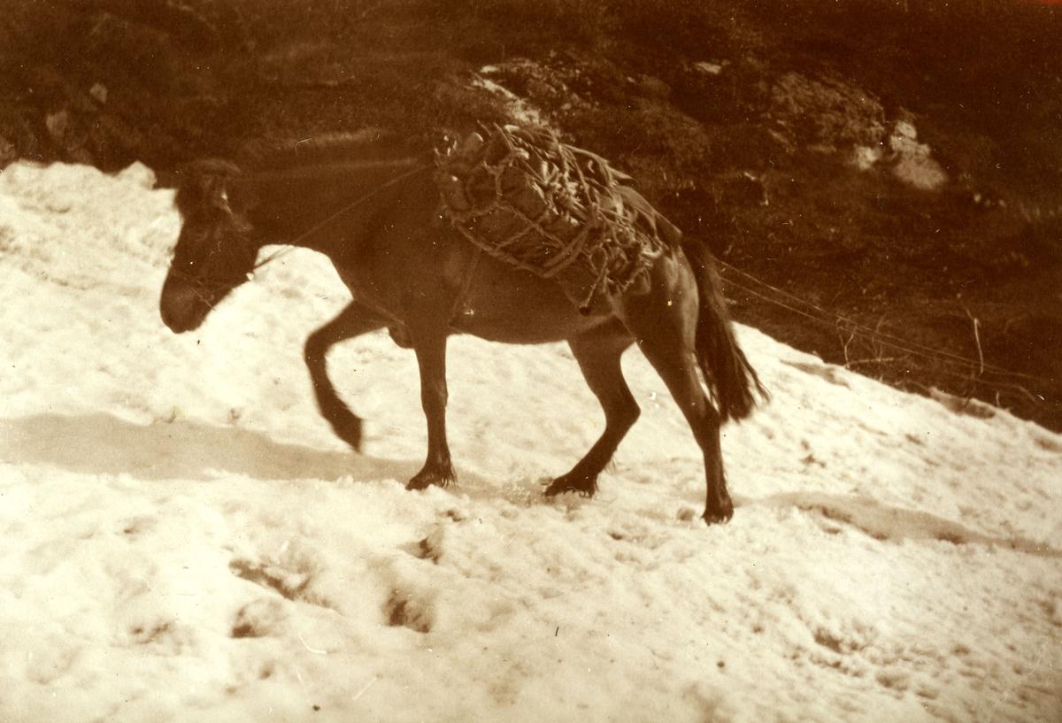 Hestetransport av torv