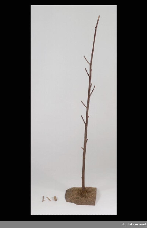 """Inventering Sesam 1996-1999: L  17   B  17   H  103 (cm) Allmogespel, leksak, """"att kappas te gudsrike"""" eller """"klättra te himla"""", bestående av Jakobs stege; obarkad trädgren med kvistkrokar, fotplatta av trä med limmade halmstrån (a), 2 st krokar (b,c) och tärning med skuret mönster (d).  Bilaga med information om spelregler i Skansens programblad. Anna Womack feb 1998"""