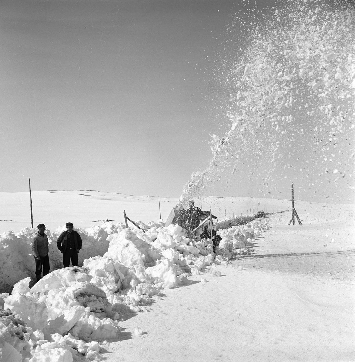Riksvei 20, Hardangervidda, mai 1963. Snøbrøyting, veien åpnes etter vinteren.