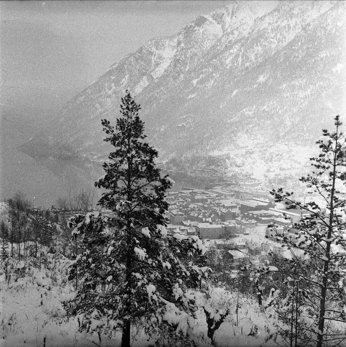 Odda, Hordaland, mars 1957. Skog.