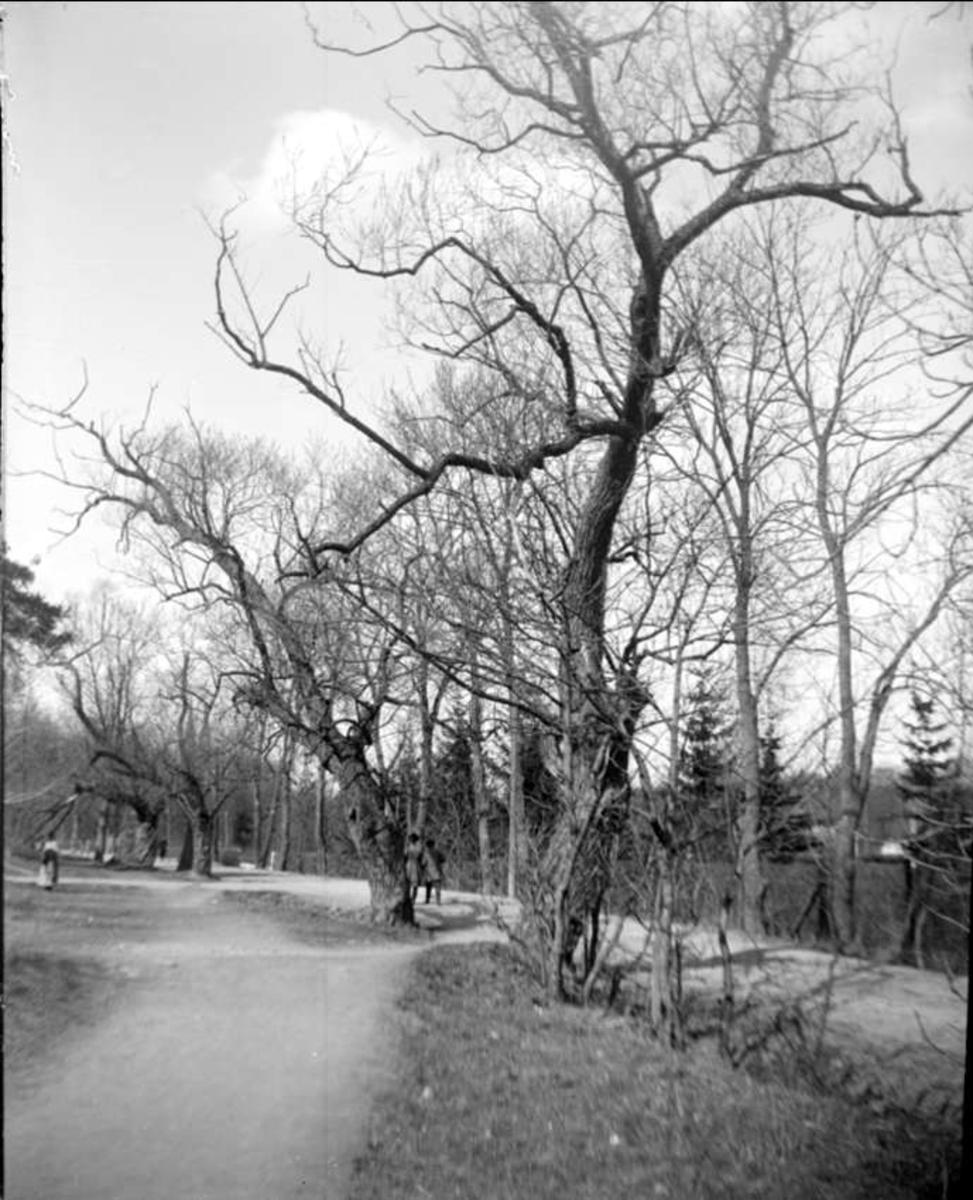 """""""Upsala. Gamla pilar vid Eklundshofsvägen"""", Polacksbacken, Kronåsen, Uppsala april 1924"""
