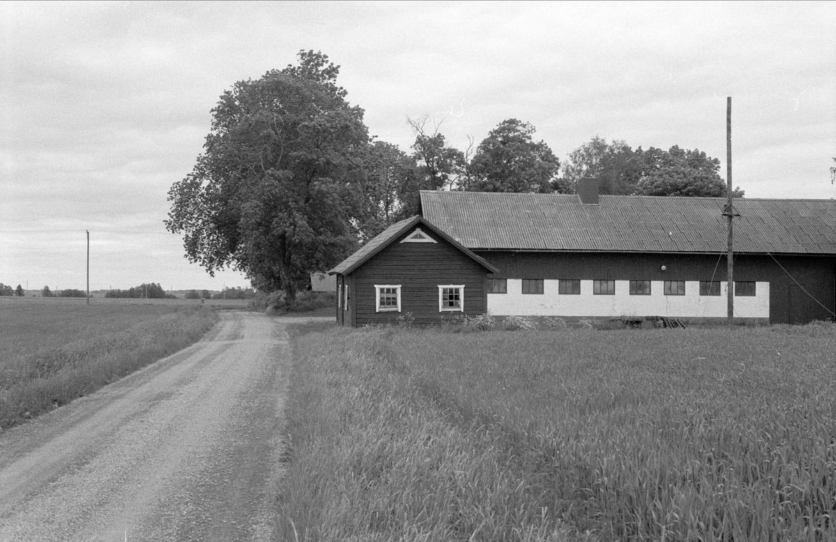 Fähus och ladugård, Målsta 1:1, Bälinge socken, Uppland 1983