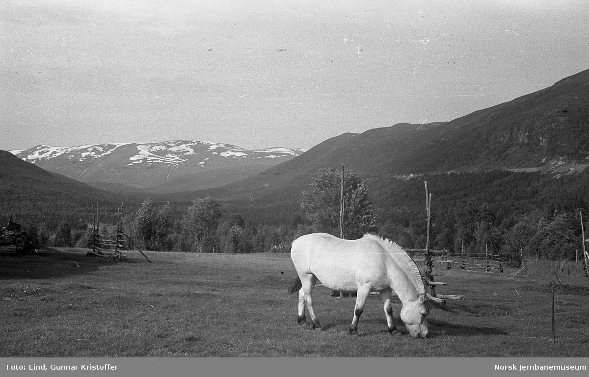 Nordlandsbaneanlegget : oversiktsbilder med linjen ved km 564,5