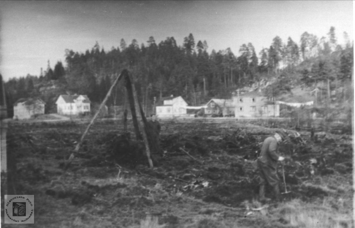 Stubbebryting på Bue, Øyslebø.