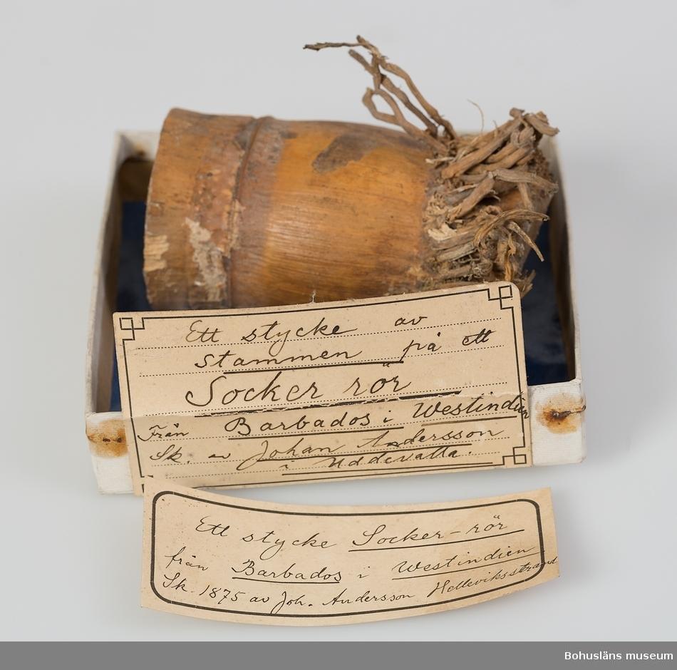 """""""Ett stycke av stammen på ett Sockerrör. Från Barbados i Westindien. Sk. av Johan Andersson i Uddevalla."""" Detta är texten på etikett fastlimmad på fyrkantig papplåda med blått vaxat papper som underlag. Lådor av denna typ användes på Uddevalla museum som  både förvarings- och exponeringsattribut (10,3 x 10,3 x 2,0 cm)."""