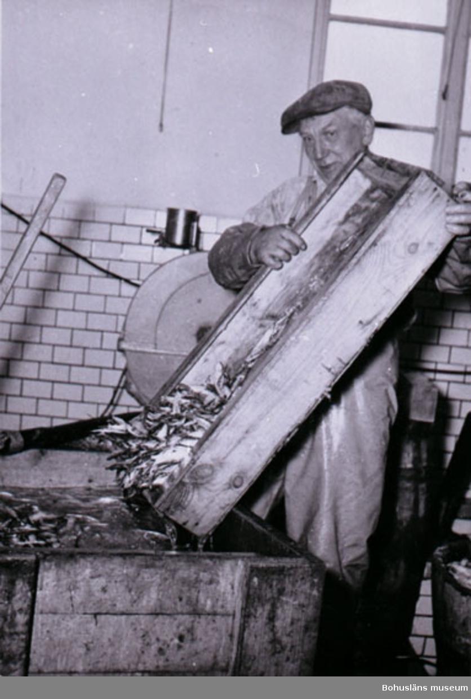 """Noteringar som medföljde bilden: """"AB Gust. Richters konservfabrik. Fjällbacka. Filial till moderfabriken i Lysekil."""" """"RICHTERS, FJÄLLBACKA, 1950-TAL ERNST JOHANSSON SKÖLJER SARDINER.""""  """"RICHTERS, FJÄLLBACKA BILDERNA UTLÅNADE AV: ALVA KARLSSON PL 142, 450 71 FJÄLLBACKA."""""""
