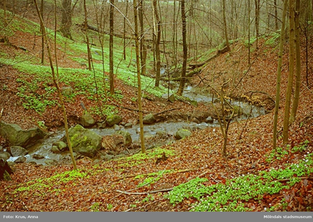 Svejserdalen - bäcken/skogen.
