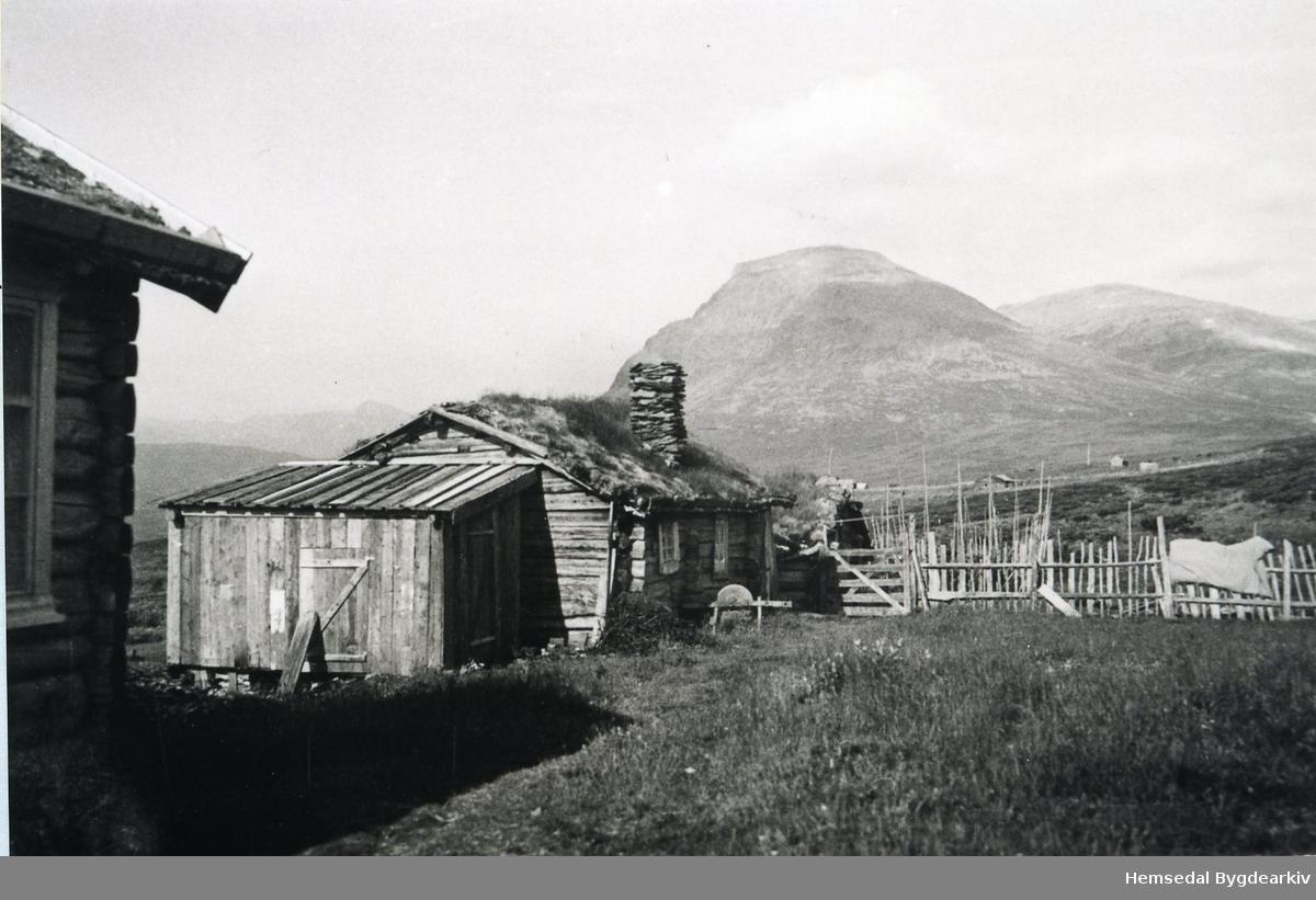 På stølen til Veslejordet i området kalla Lykkjestølane (Lykkjestølo, dialekt). Skogshorn i bakgrunnen
