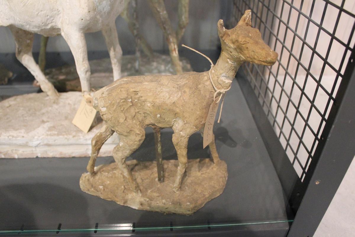 """Skulptur i gips av en hjortekalv. Forarbeid til Studenterlunden Oslo nr.122 og nr.123, eller """"Storebror"""" nr. 30."""