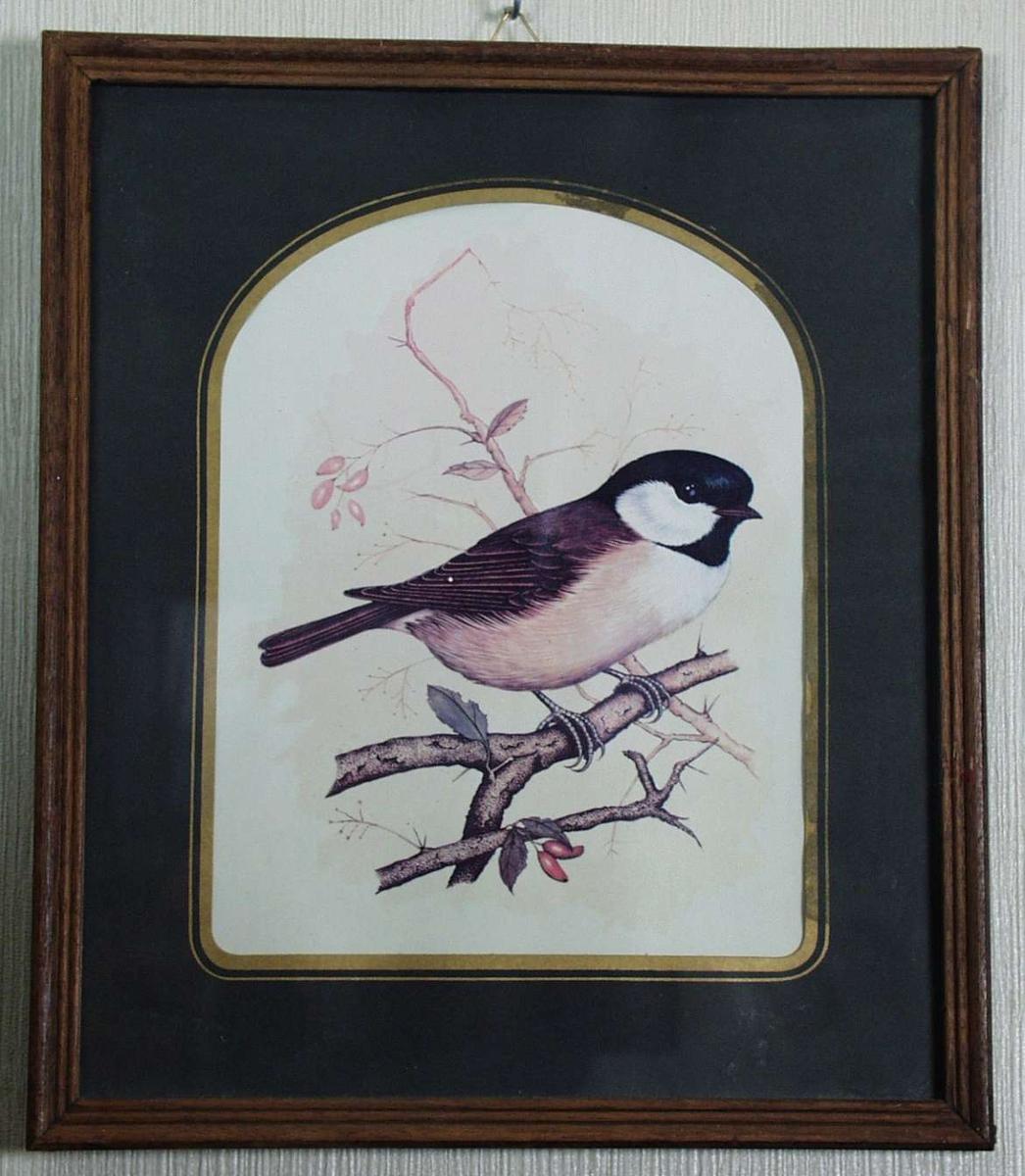 Bilde med fuglemotiv.