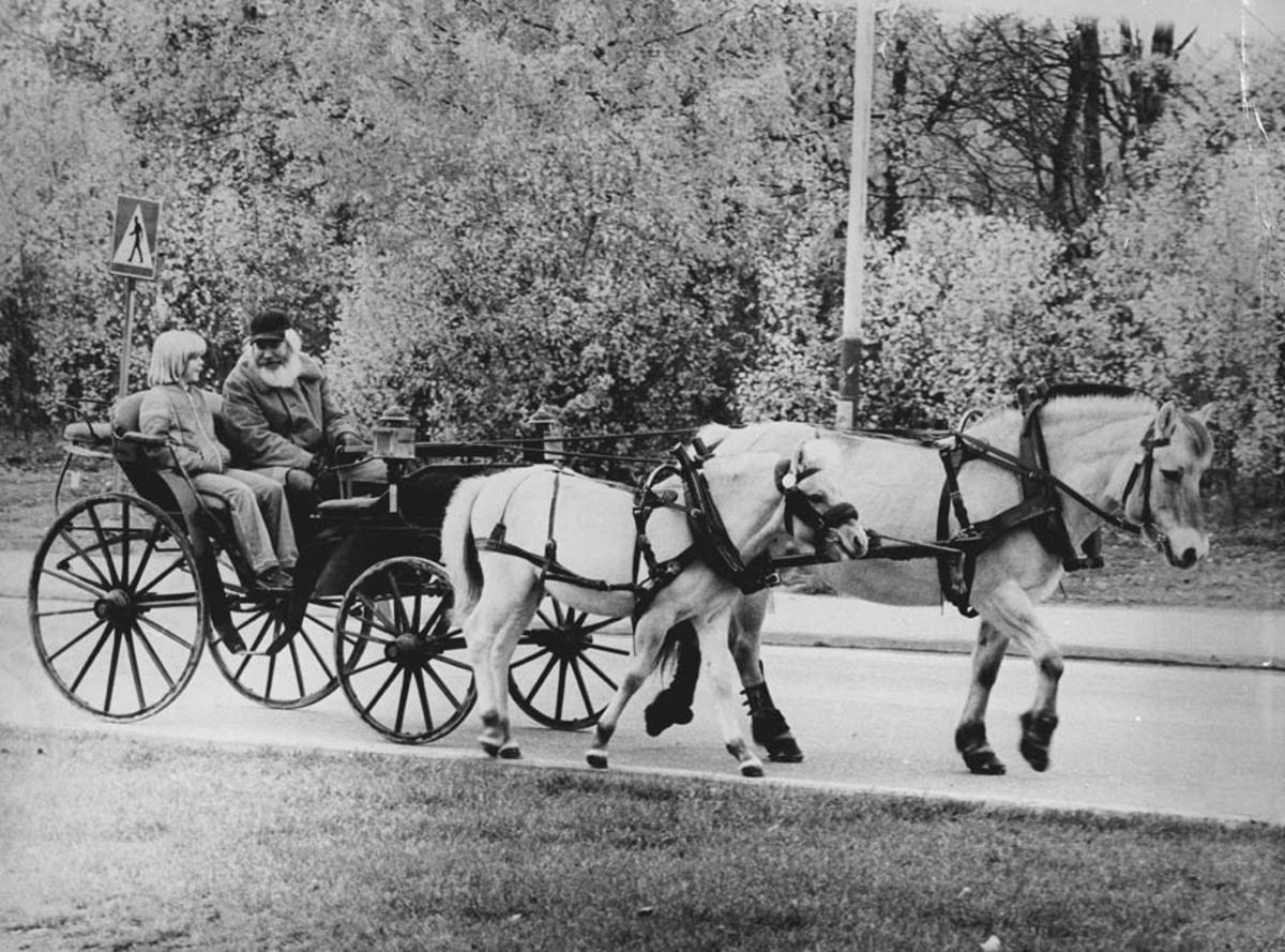 Dokke - Olsen med hest og trille i Ski sentrum.