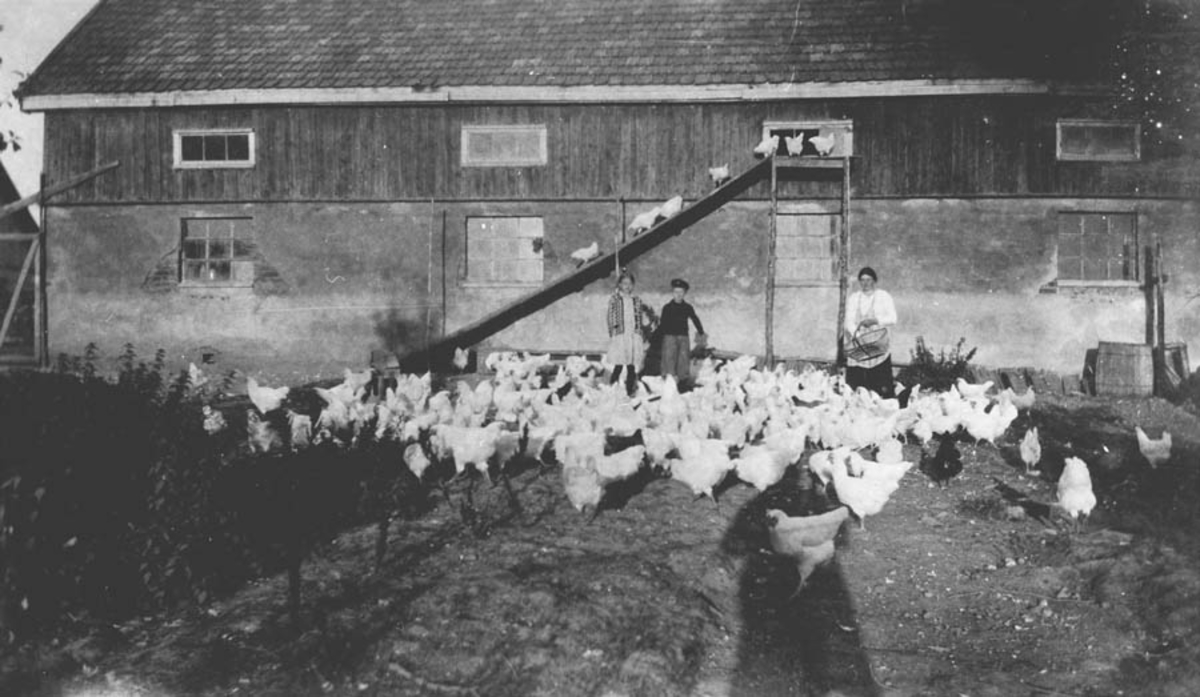 Berit, Anne og Thorstein Ødegård mater høner foran  hønsehuset på Lunner.