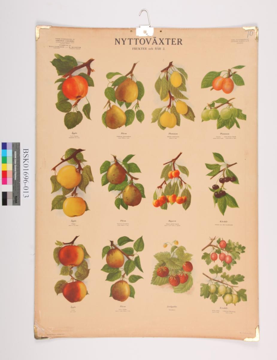 Diverse frukt og bærsorter