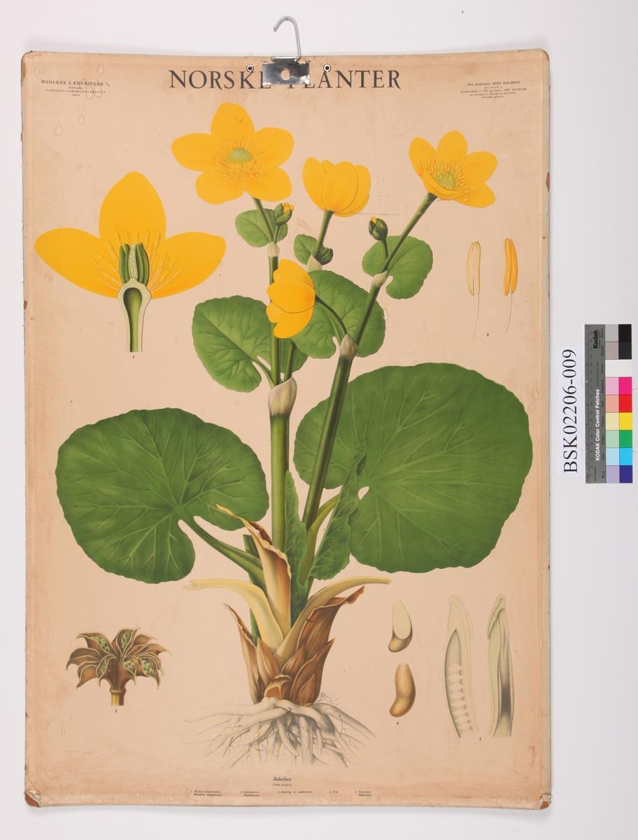 Blomst. Soleihov